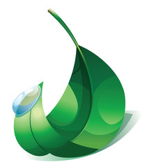 Vector illustration of green leaf and water drop.