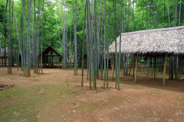 tropical forest in Myanmar with bamboo piles
