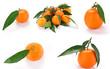 Clementine con foglie - collage