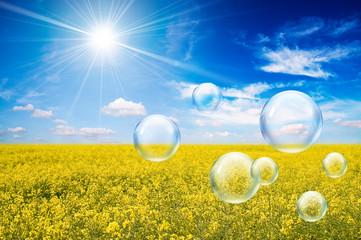 sunny oilseed bubbles