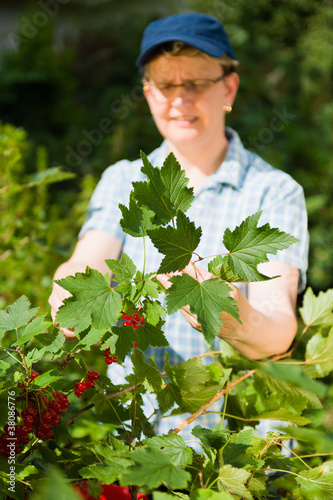 Woman and redcurrant