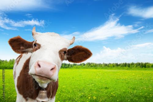Fototapeten,agricultural,ackerbau,tier,biest