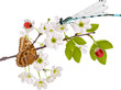 cherry tree flowers and bright insects on white