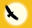 Vector silhouette of flying eagle on sun background