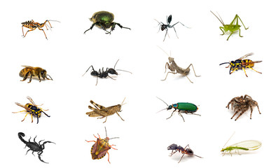 Set of insects isolated on white background