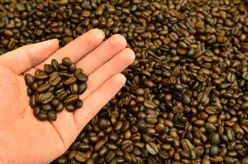 Fresh roasted coffee grain in hand