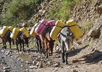 Donkey caravan in mountains of Nepal