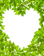 Heart frame from green leaves on white background