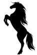 Fototapeten,pferd,mustang,wild,silhouette