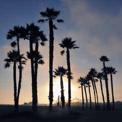 Sunset and palm trees, Santa Monica beach, Los Angeles, USA