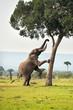 Fototapeten,elefant,tier,wildlife,kenya