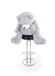 teddy bear sitting on a chair. isolated