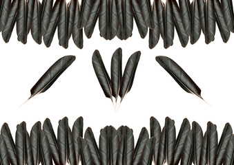 feathers on white background. Black feather