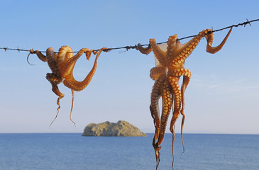 Octopus hanging up to dry
