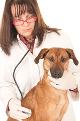 Female veterinarian examing dog