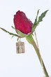 The picture of lovers kissing on Gold pendant with red rose