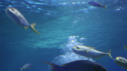 a view of aquarium withfishes