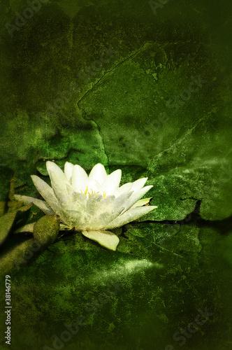 lily flower print