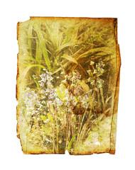 wild flower print