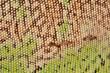green iguana skin texture
