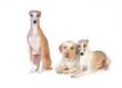 Eine kleine Gruppe Hunde
