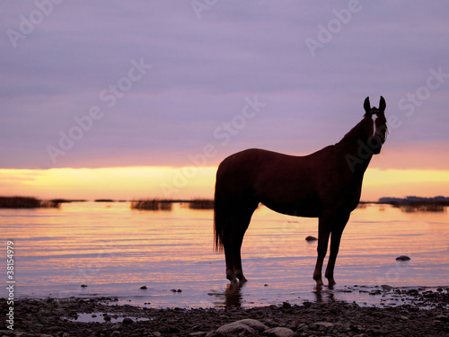horse in suinset on the sea