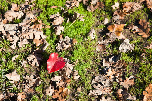 Red Heart Leaf