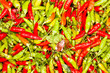 Green and red chili.