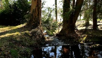 Naturpark II / Full Hd Video