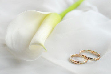 wedding rings and white flower on white