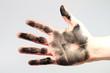 Schwarze Hand