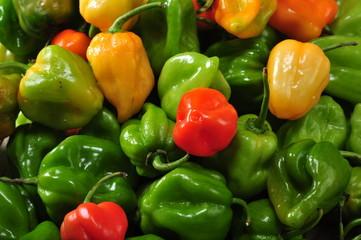 peperoncino messicano chile habanero