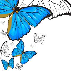 Blue bterflies background