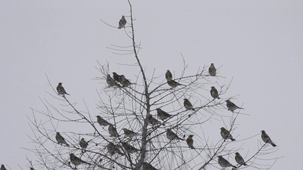 Birds during the winter
