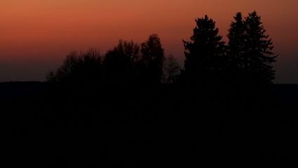 Sonnenuntergang im Wald / Full Hd Video