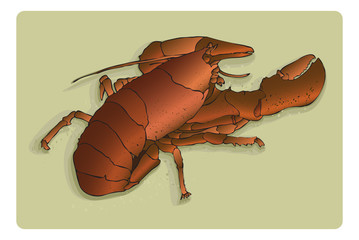 Live lobster- vector on 7 layers, easy to edit