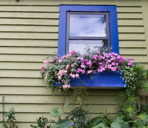 Window box with flowers