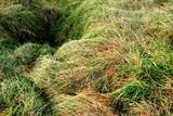 anfratto nel terreno erboso poster