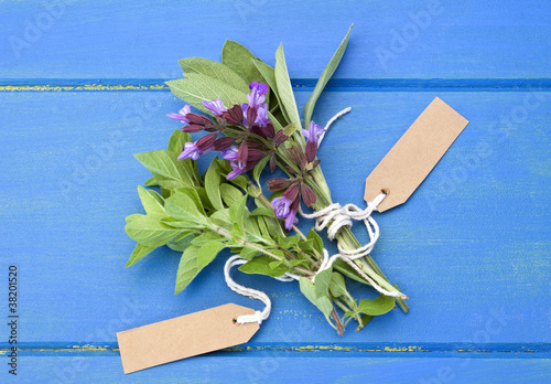 Sage and oregano herbs with tags on blue table
