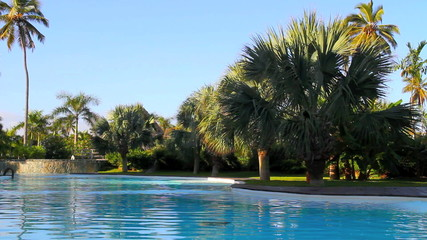 Pool with Palm Trees