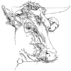 cow - black and white sketch