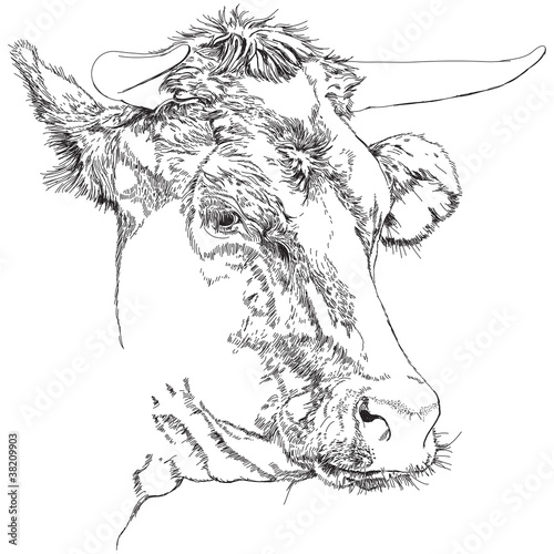 cow - black and white sketch © Uladzimir