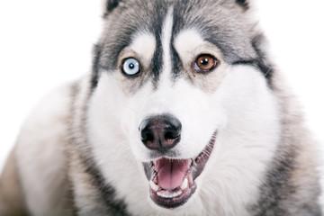 Dog on a white background.