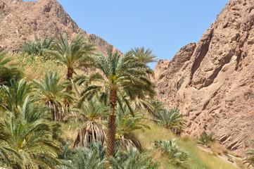Palme vor Bergen