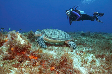 Hawksbill Turtle and Scuba Diver - Cozumel