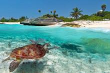 Paysage mer des Caraïbes avec la tortue verte au Mexique