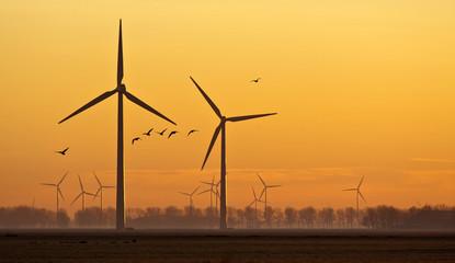 Wind energy and flying birds at sunrise