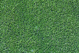 Artificial Grass poster
