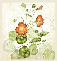 Greeting card with nasturtium