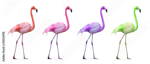 Fotobehang Flamingo Compilation flamants roses